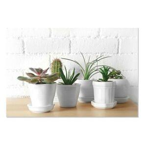 Obraz PLANT 60 × 40 cm